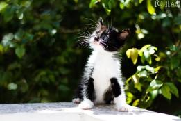 Ensaio PET - Gatos